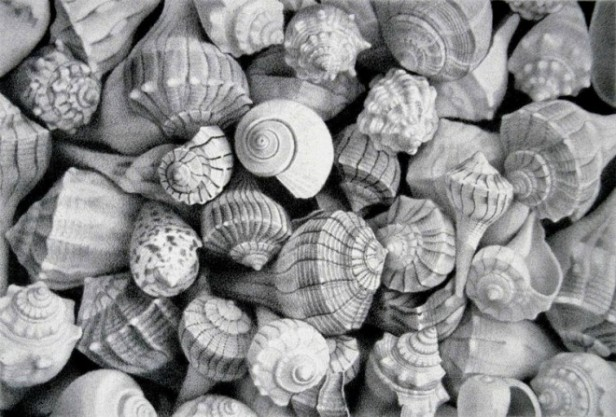 25-sea-shell-realistic-pencil-drawing-by-mayrolstad.preview